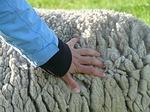 sheepskin-57713_150
