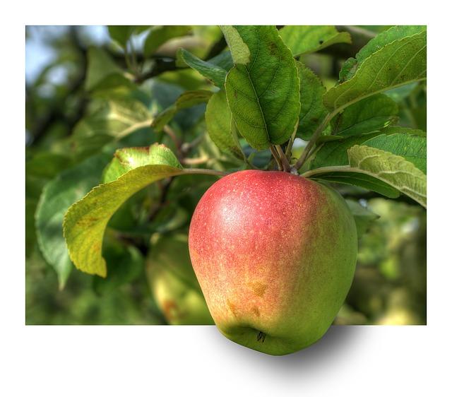 apple-191004_640