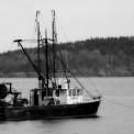 Trawling AIM